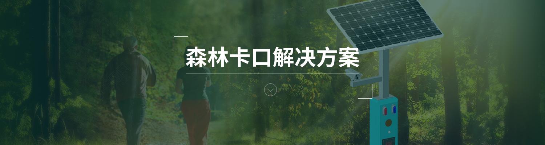 森林卡口.jpg